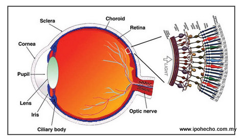 ipoh echo issue 140, Dr Lee Mun Wai, Lee Eye Centre, Stem Cells in Retinal Disease