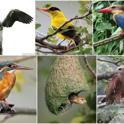 Kinta Nature Park - A Haven for Birds, Fish and Mammals