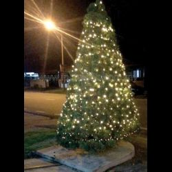 Hector's Christmas Tree Continues to Shine