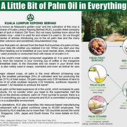 A Little Bit of Palm Oil in Everything