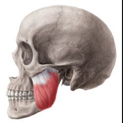 Masseter Muscle Reduction Procedures