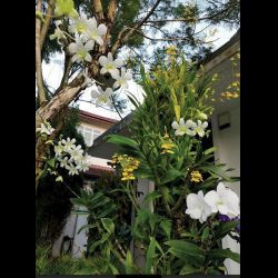 Letter: How I Lost Money in Planting Orchids