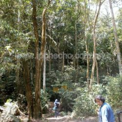 iSpeak:  Preserve Forests for our Children