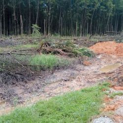 Matang Mangrove Forest Land Issue