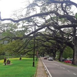 Secrets of Taiping Lake Gardens