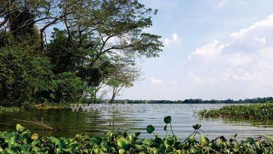 Photo of Kinta Nature Park