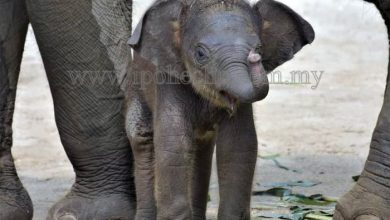Photo of Taiping Zoo's Latest Addition