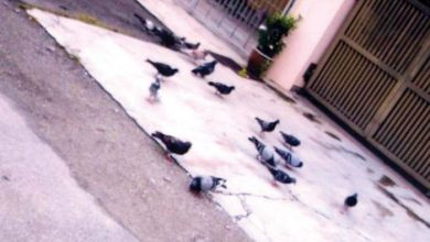 Photo of Ruckus Caused by Cats and Pigeons