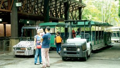 Photo of RM100 Million for Zoo Upgrade