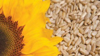 Photo of Vitamins C & E