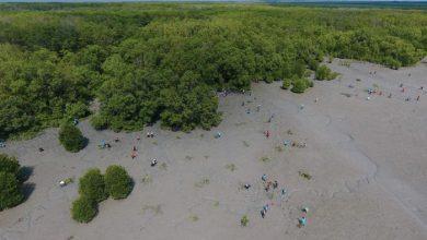 Photo of Planting 5000 Mangrove Saplings