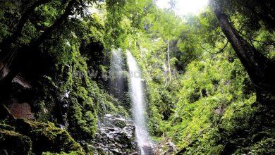 Photo of Royal Belum – Gateway to Nature's Treasures