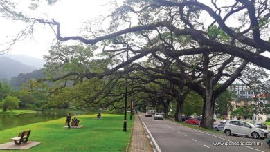 Photo of Secrets of Taiping Lake Gardens