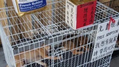 Photo of May's Dog Shelter