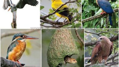 Photo of Kinta Nature Park – A Haven for Birds, Fish and Mammals