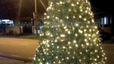 Photo of Hector's Christmas Tree Continues to Shine