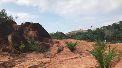 Photo of Connexion:  Kledang Hill and the long-term pain