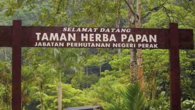 Photo of iSpeak:  Papan Herbal Garden – In the Middle of Nowhere