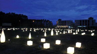 Photo of Sneak Peek: Field of Lights