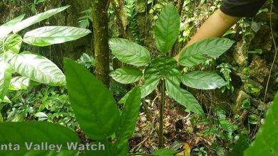 Photo of A Secret Forest in Gunung Rapat