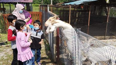 Photo of New Attraction: Pavilion Petting Zoo