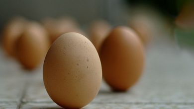Photo of Standing Eggs!?