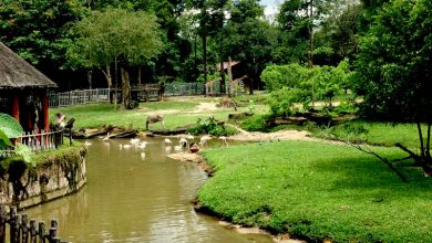 Photo of Zoo Taiping Successfully Breeds 14 Endangered Species