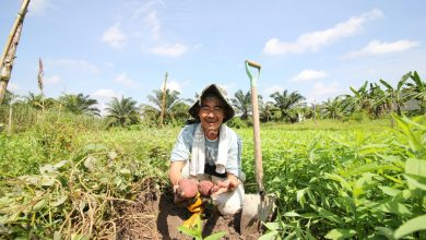 Photo of Biodynamic Farming: Sustainable Agriculture