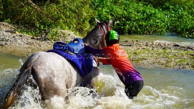 Photo of TT5 Extreme Equestrian Sports