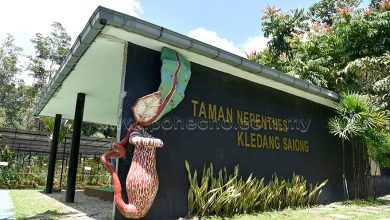 Photo of Kledang Saiong Nepenthes Garden: One of the Largest in the World