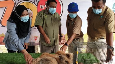 Photo of Upcoming Petting Zoo to be the Largest in Malaysia