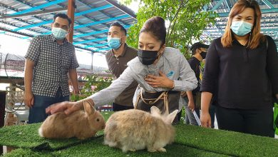 Photo of Petting Zoo @ Gunung Lang Opens Today