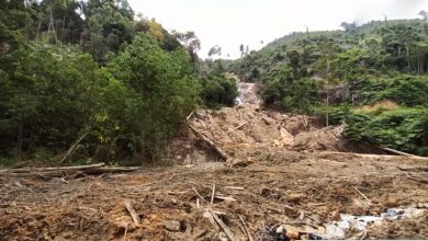 Photo of MB Orders Investigation on Segari Waterfall Deforestation