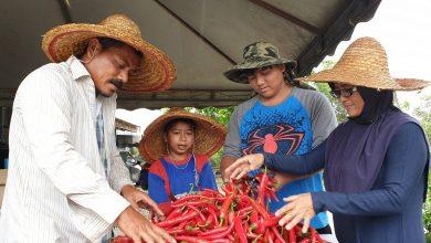 Photo of Fertigated Chilli Entrepreneurs