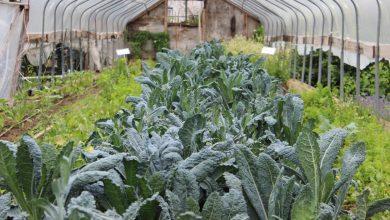 Photo of Urban Farming to Guarantee Food Security