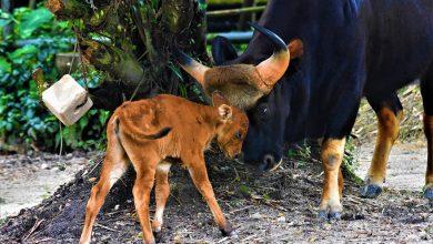 Photo of Taiping Zoo and Night Safari Anak Angkat Programme (PAAZTNS)