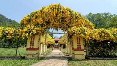 Photo of Spring at Gunung Lang Recreational Park