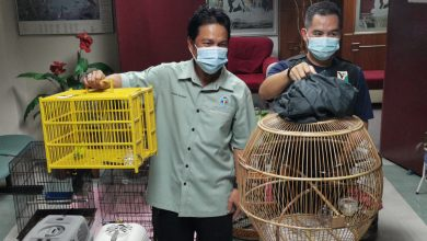 Photo of 18 Birds of Eight Species Worth RM65,000 Seized