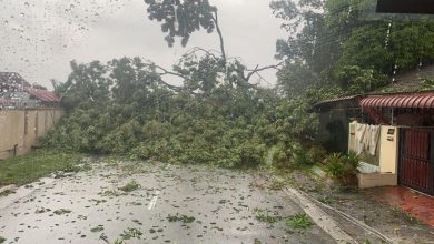 Photo of Tree Fell onto Two Houses, No Victims Reported