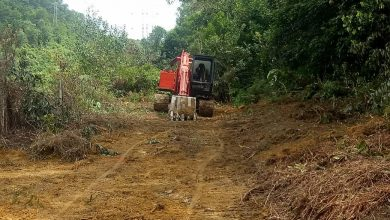 Photo of Further Attempts of Forest Encroachment Thwarted