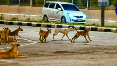 Photo of MBI Received 417 Complaints About Strays During MCO