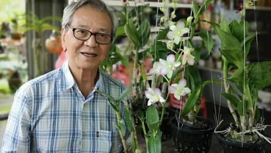 Photo of My misadventure in planting Dendrobium for export