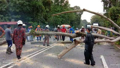 Photo of Fallen Tree Branch at Tanjung Malim, One Casualty Reported