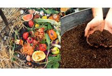 Photo of Composting Household Waste at Home