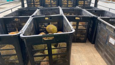 Photo of MAQIS Stopped Durian Smuggling Attempt