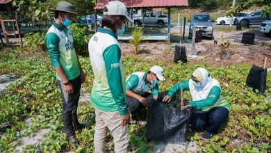 Photo of More Trees to Come for Planting in Ipoh to Sustain the Environment