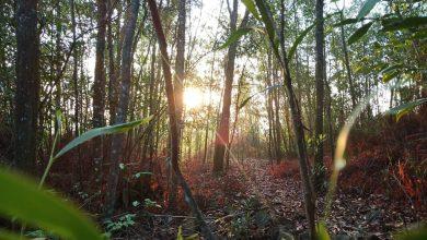 Photo of Outdoor Adventure in the Woods